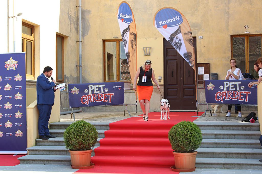 L'album di Castiglione Cinema 2019