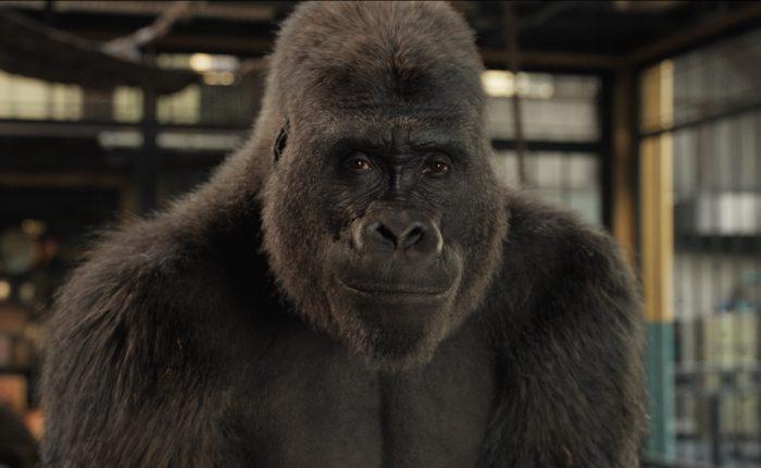 Ivan, un gorilla unico e insuperabile